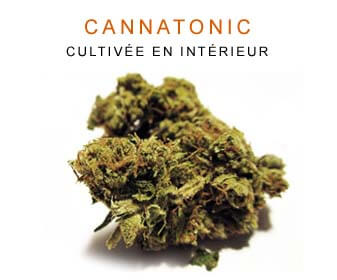 CBD en gros : Cannatonic Indoor