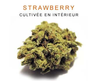 CBD en gros : Strawberry